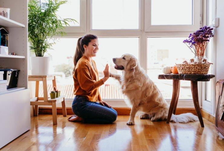 drzwiczki dla psa