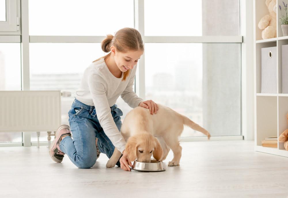 zwierze dla dziecka