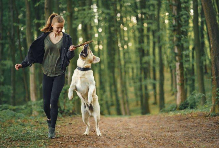aktywny spacer z psem